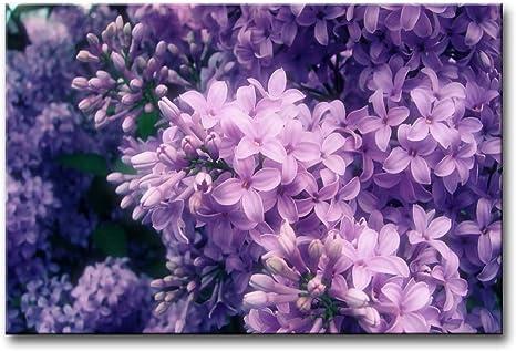 Beautiful Flower Lilac Purple Basket Print Home Decor Wall Art choose your size