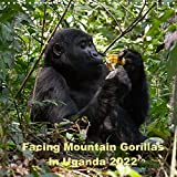 Facing Mountain Gorillas in Uganda (Wall Calendar 2022 300 × 300 mm Square)