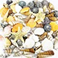 CYS EXCEL Seashells Mixed Beach Seashells, Colorful Nature Seashells, Wedding Party Themes, Party Decorations Crafts, vase Filler sea Shells, sea Shells Craft