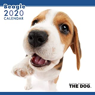 The Dog Wall Calendar 2020 Beagle
