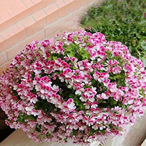 Acecoree Samenhaus- Selten Duftgeranie Blumen Samen,Blumentöpfen Saatgut winterhart mehrjährig Anti Moskito Blume Kraut Saatgut für Garten