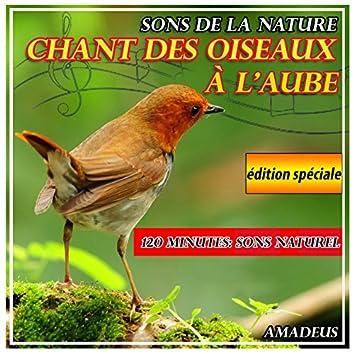 Chant des oiseaux à l'aube: sons de la nature: édition spéciale
