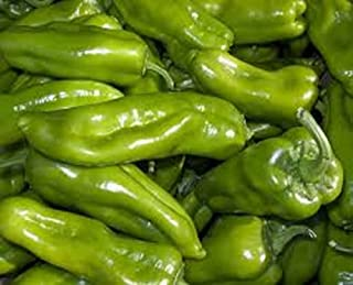Pepper, Cubanelle Sweet Pepper Seeds, Organic, NON GMO, 500 seeds per pack, Some prefer the Cubanelle pepper to traditional bell peppers because of their sweet and mild flavor.