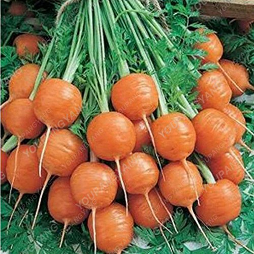 200pcs/sac rond Hot carotte Graines Graines de légumes biologiques Bonsai délicieux aliments en plein air pour les plantes en pot jardin rouge