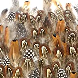 Best Feathers - Coceca 300pcs Assorted Chicken Feathers for Various Crafts Review