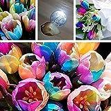 Zoom IMG-2 5pcs arcobaleno colorato tulipano bulbi