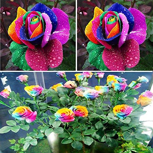 Rosepoem Belle 500Pcs Coloré Rainbow Rose Fleur Graines Jardin Jardin Décor