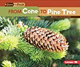 From Cone to Pine Tree (Start to Finish, Second Series)
