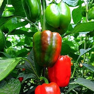 Sweet Pepper Seeds - California Wonder - 5 Pounds, Bulk, Vegetable Seeds