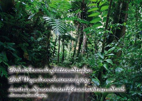 2 Postkarten Urwald Regenwald - Spruch: Geh nicht nur die glatten Straßen. Geh Wege die noch niemand ging, damit du Spuren hinterläßt und nicht nur Staub.