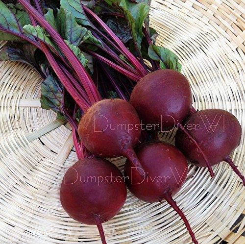 Detroit foncé de betterave rouge doux savoureux Hauts Heirloom organique 70+ Sweet Seeds non-OGM