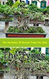 The Types of Bonsai Trees for Sale: The Varieties of Bonsai Trees for Sale