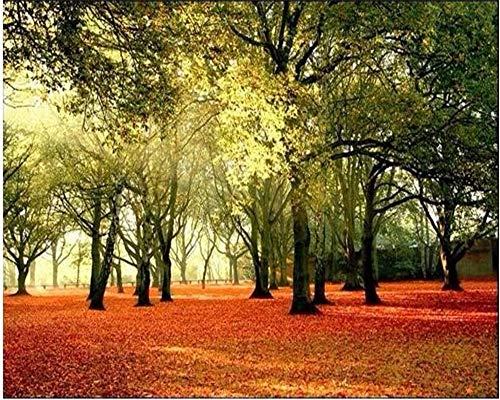 Fototapete 3D Wandtapete Fresko Hd Laubwald Sunny Landscape Park Stuhl Hintergrund Benutzerdefinierte Tapete Papel De Parede, 350 × 245Cm