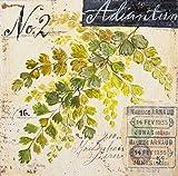Posterazzi Maidenhair Fern-Sketchbook Poster Print by Angela Staehling, (24 x 24)