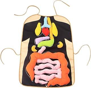 tidystore 3D Orgel Sch/ürze Anatomie Sch/ürze Menschlicher K/örper Organe Bewusstseins-p/ädagogische Einblick Spielzeug f/ür Hauptvorschulunterrichtshilfe