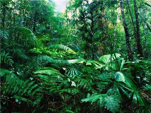 ConversationPrints Amazon Rainforest Glossy Poster Picture Photo rain Forest Jungle Leaf Green