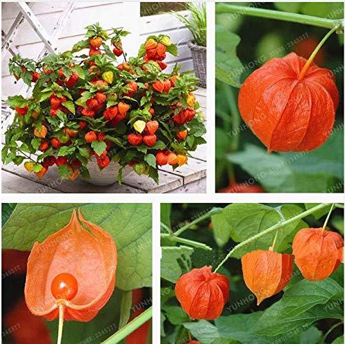 Portal Cool 10 - Samen: Numex Chinese New Year Hot Pepper Seeds - für Behälter, Töpfe, Terrassen usw.