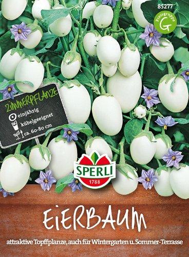 Eierbaum- essbare Früchte