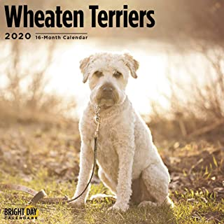 2020 Wheaten Terriers Calendar 16 Month 12 x 12 Wall Calendar by Bright Day Calendars (Terriers Collection)