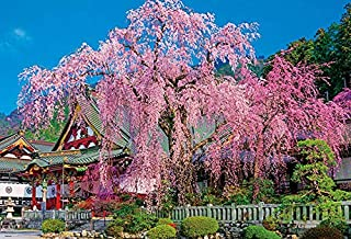 1000ピースジグソーパズル 枝垂れ桜咲く久遠寺(49×72cm)