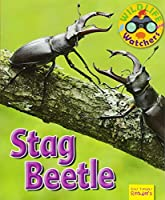 Wildlife Watchers: Stag Beetle 2017 (Ruby Tuesday Readers)