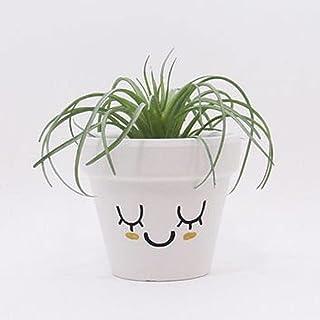 إناء نباتات ، إناء زهور ، نبات هوائي