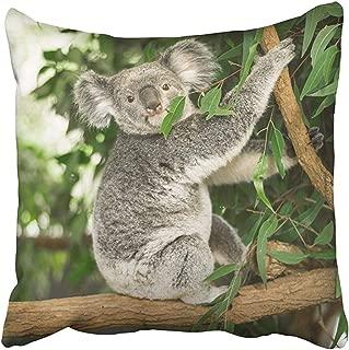 Throw Pillow Cover 18X18 Inch Polyester Ears Australian Koala Outdoors in Eucalyptus Tree Animal Aussie Australia Awake Bear Bush Decorative Pillowcase Two Sides Square Print for Home