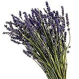 Dutch Masters in Dried Flowers - Ramo de flores secas de lavanda | Flores secas | Ramo de decoración de lavanda seca | azul oscuro | 40 cm