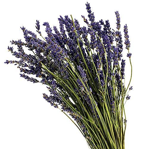 Dutch Masters in Dried Flowers Trockenblumenstrauß Lavendel | Getrocknete Lavendel | Lavendelstrauß Lavendelbund Trockenblumen Raumduft Deko Potpourri
