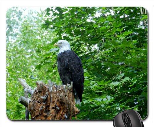 Eagles Perch Mouse Pad, oiseaux Tapis de souris (Mouse Pad)