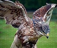 LHJOY 子供のためのジグソーパズル1000ピース鳥のワシの羽くちばし動物子供のための誕生日プレゼントとホリデーギフト 75x50cm
