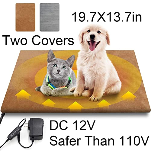 Heat Lamp For Dogs Amazon Com