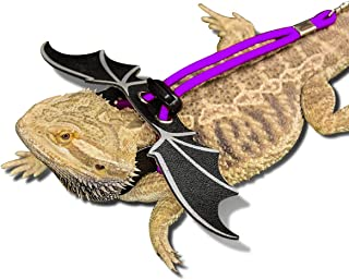 purple bearded dragon
