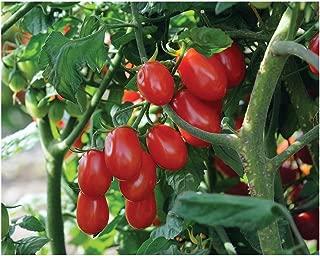 Best organic grape tomato seeds Reviews
