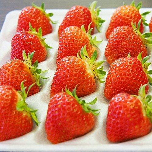 (小粒)良食味の新しい夏秋イチゴ(秋田県産なつあかり)2パック500g(2S-3S)