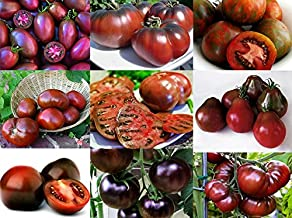 Please Read! This is A Mix!!! 30+ Organically Grown Black Tomato Seeds, Mix of 9 Varieties, Heirloom Non-GMO, Black Prince, Cherokee Purple, Black Cherry, from USA