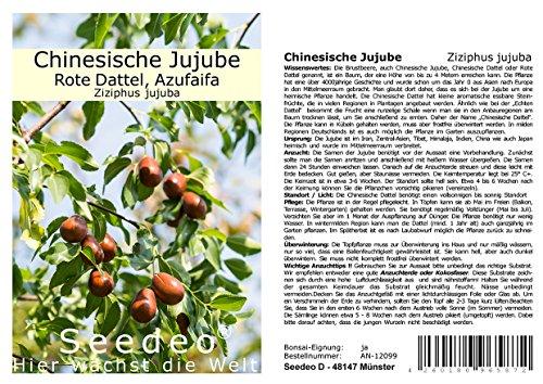 Seedeo Chinesische Jujube (Ziziphus jujuba) 10 Samen