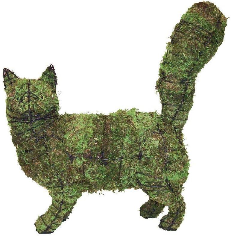 Cat Walking 18