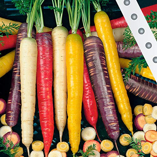 Keland Garten - Rarität Bio Sommermöhre \'Rainbow Mix F1\' Gemüsesamen Saatgut Garten winterhart mehrjährig