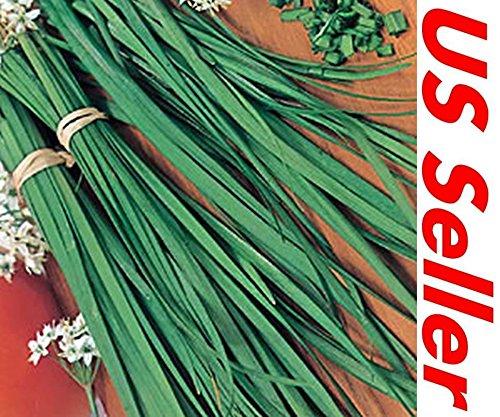100 PCS L'ail frais Ciboulette herbes Graines E55, Livraison rapide des États-Unis Vendeur