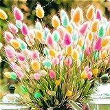 honic promozione 100 parti/pacchetto della coda di volpe erba erba ornamentale seeds hordeum jubatum seed balcone giardino rare semi di fiore plantas pentola