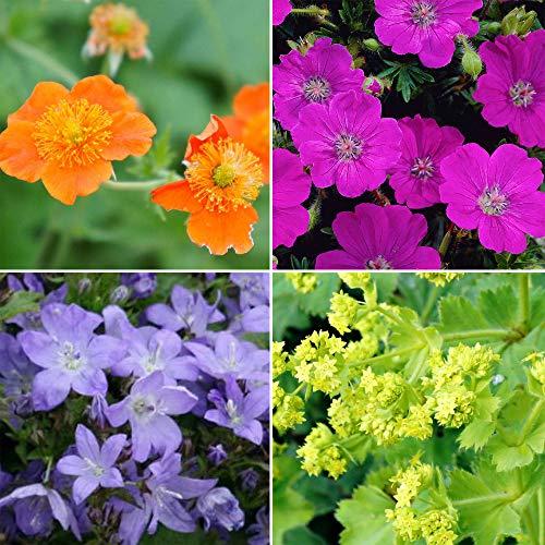 8x Mix di perenni COVERING FLOWERS | Piante per la copertura del terreno | Arancio Rosa Viola | Piante organiche da giardino |