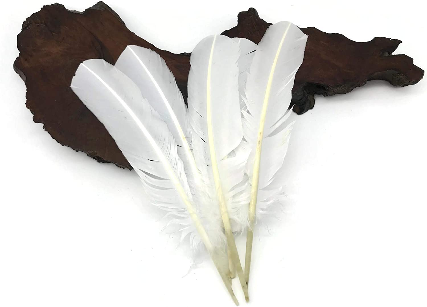 Moonlight Feather 50 Pieces - Turkey White R Max 41% OFF Nashville-Davidson Mall Feathers
