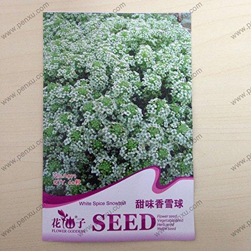 Originales graines paquet de fleurs, graines de White Spice Snowball, floraison à maturité 70 jours, 60 particules de graines / sac