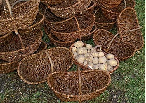 Beste Angebote Gemüsekorb Kartoffelkorb Erntekorb WEIDENKORB Pilzkorb Blumenkorb Einkaufskorb (36cm)