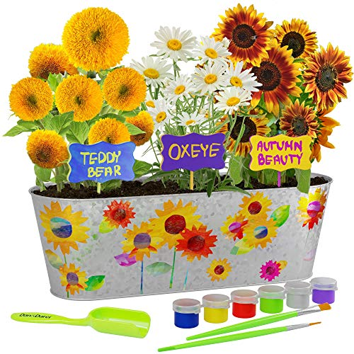 Paint & Plant Sunflower Growing Kit - Grow Autumn Beauty, Teddy Bear, Oxeye Sun Flowers : Includes Everything Needed to Paint and Grow - Great STEM Gift for Children