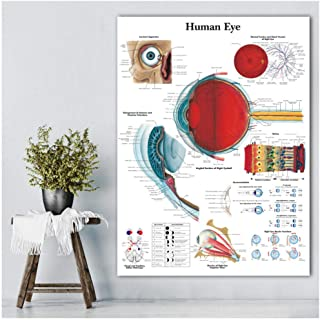 DNJKSA Anatomical Function Human Eye Chart Art Poster Print Body Map Canvas Wall Pictures for Medical Education Home Decor-50x70cm-No Frame
