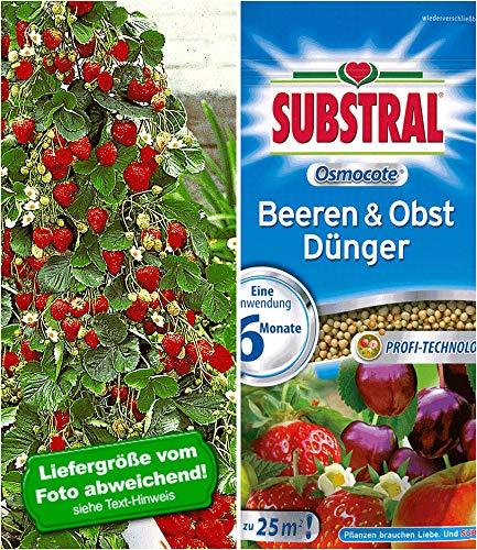 BALDUR Garten Kletter-Erdbeere® 'Hummi®'& SUBSTRAL® 'Beeren & Obst' Düngeperls,1 Set