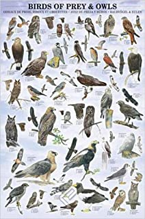 Birds of Prey and Owls - Nature Poster (Birds with Definitions) (Size: 24 x 36 inches)