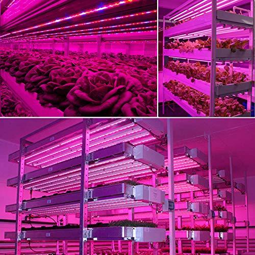 2 tira Roleadro LED Cultivo Interior IP65 L/ámpara Cultivo LED Grow LED Light con Temporizador 3H//6H//12H y Regulable Brillo para Armario Cultivo Interior//Plantas de Interior//Invernadero